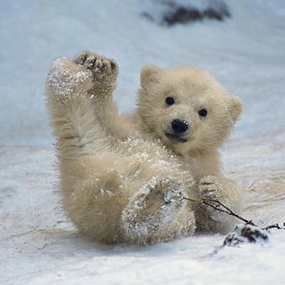 小南极熊的头像.