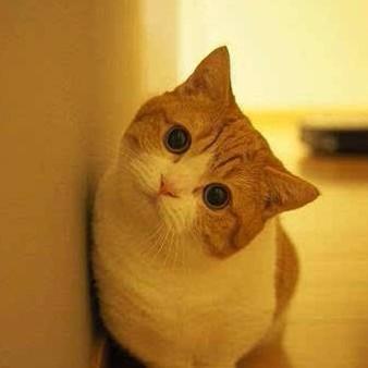 橘貓囡囡的头像.
